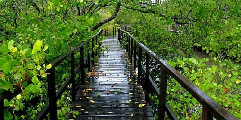 Wisata Alam Mangrove Supiori Siap Kalahkan Objek Wisata Di