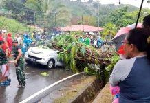 Mobil Avanza yang tertimpa pohon tumbang di Jalan Nirwana, Angkasapura, Distrik Jayapura Selatan, Selasa (16/7/2019)