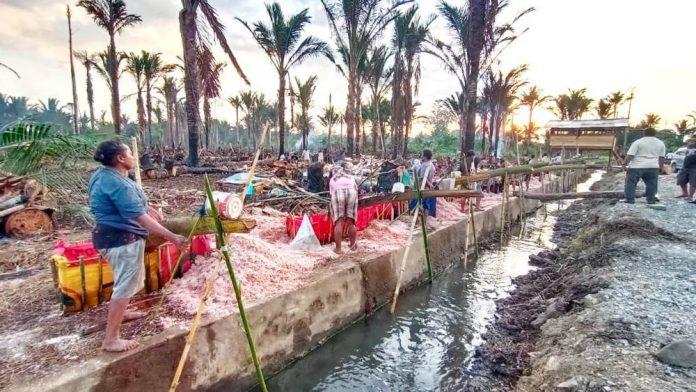 Masyarakat Kampung Ifar Besar yang sedang mengolah sagu
