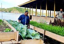 Bercocok tanam sayur dengan menggunakan metode vertikultur