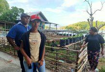 Adolf Yoku dan kelompok tani binaan Pemerintah Daerah Kabupaten Jayapura saat mengolah lahan pertanian untuk program ketahanan pangan di Hawaii