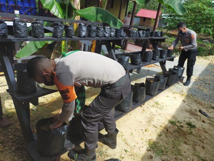 Personil Polres Supiori saat merawat tanaman sayuran yang dikembangkan di polibag